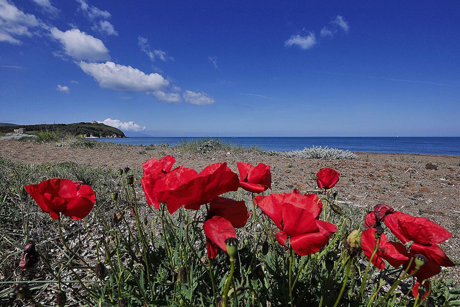 La spiaggia di Rimigliano, San Vincenzo - Hotel Ciritorno
